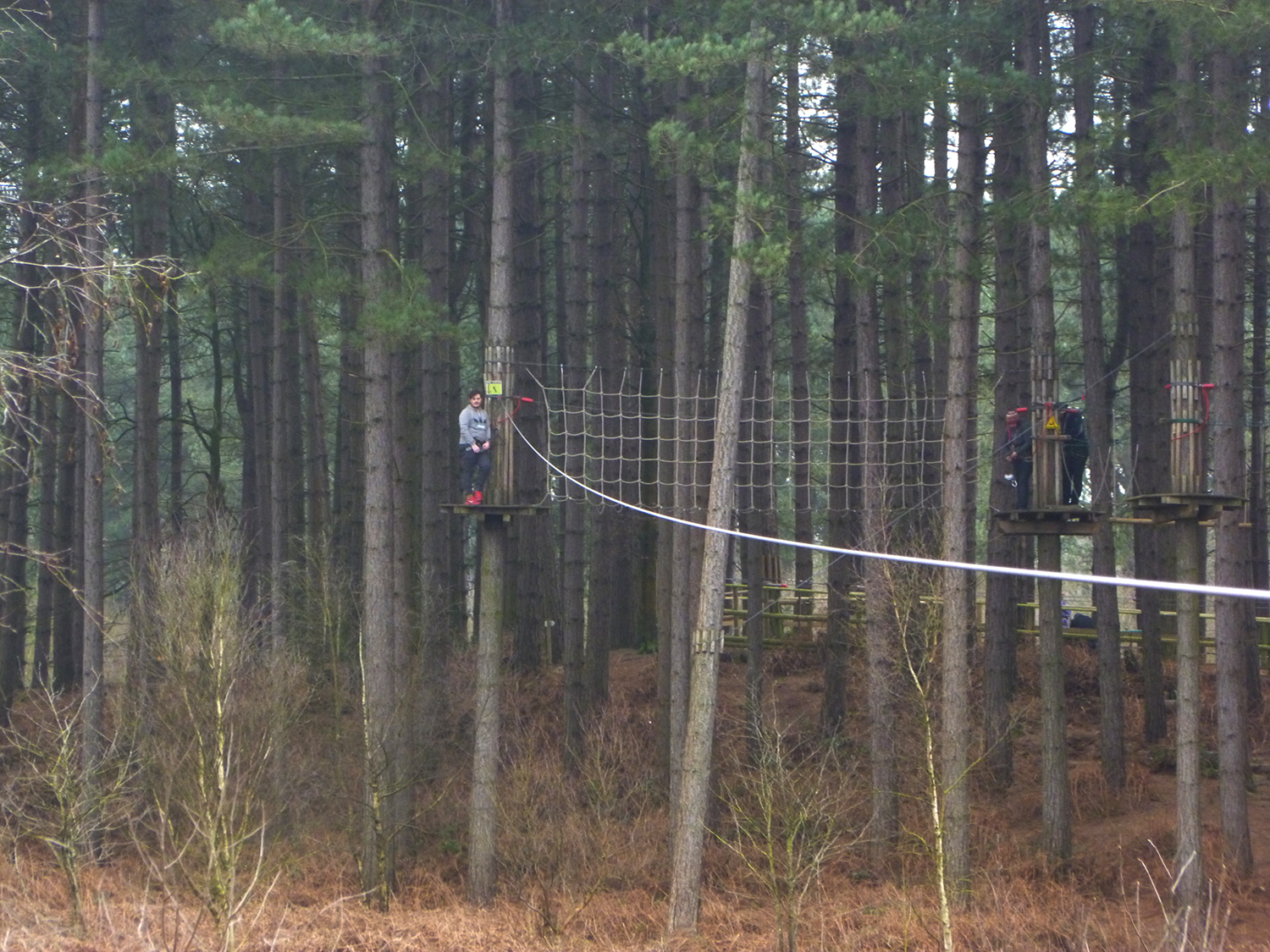 Go Ape Delamere Forest in Cheshire Review